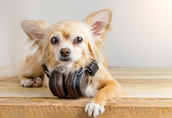 audible for dogs