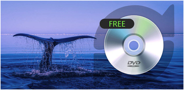 what is the best free dvd ripping software