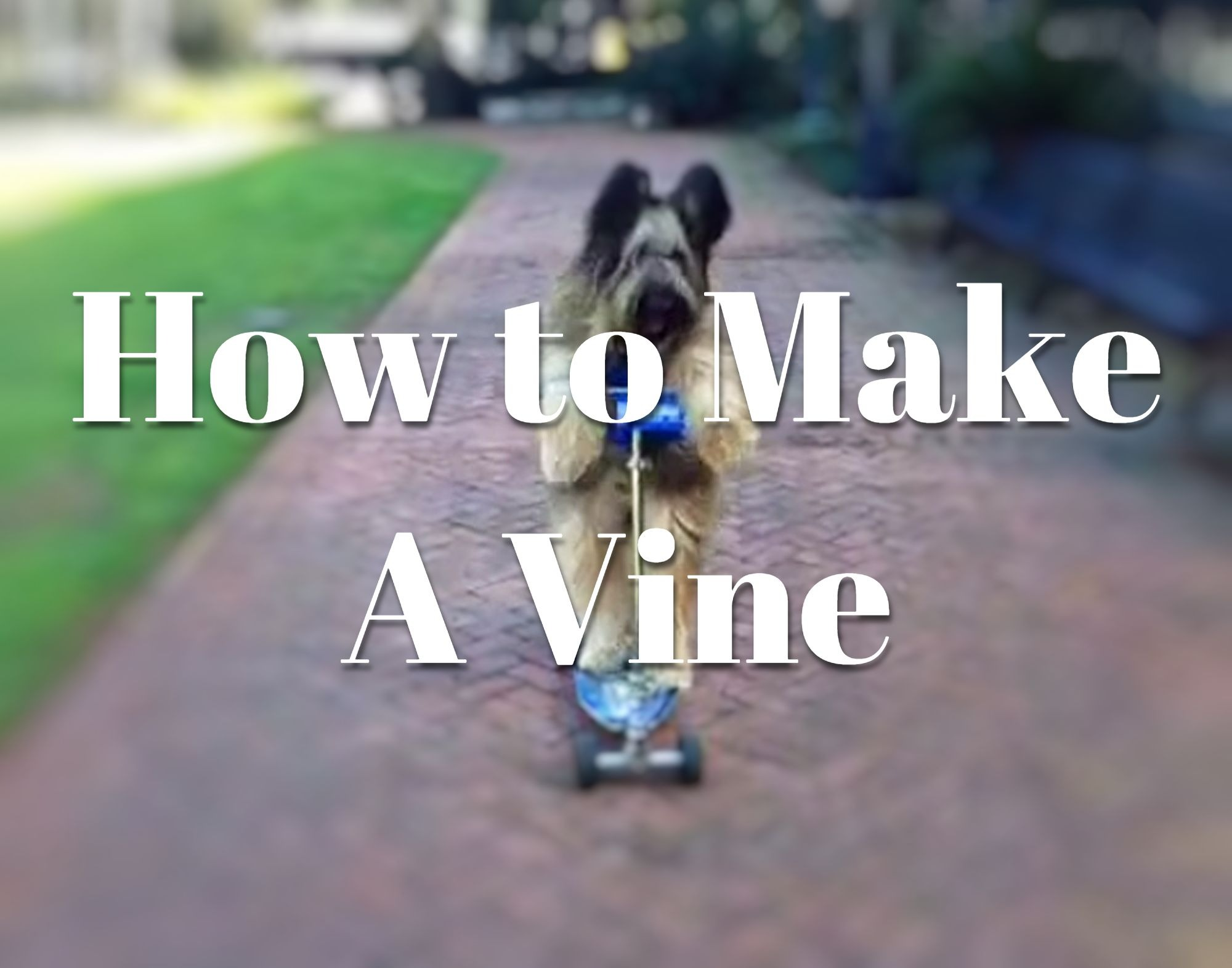 how to make a vine